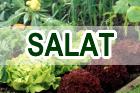 salat_140x93_beschriftet